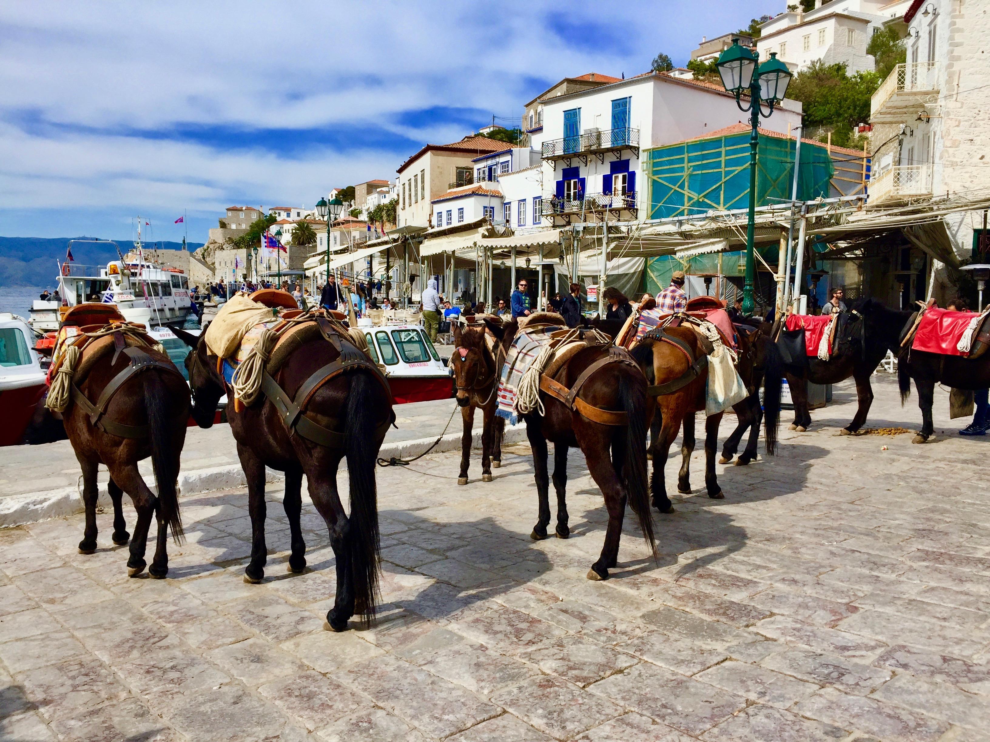 donkeys_hydra_greece_lustforthesublime