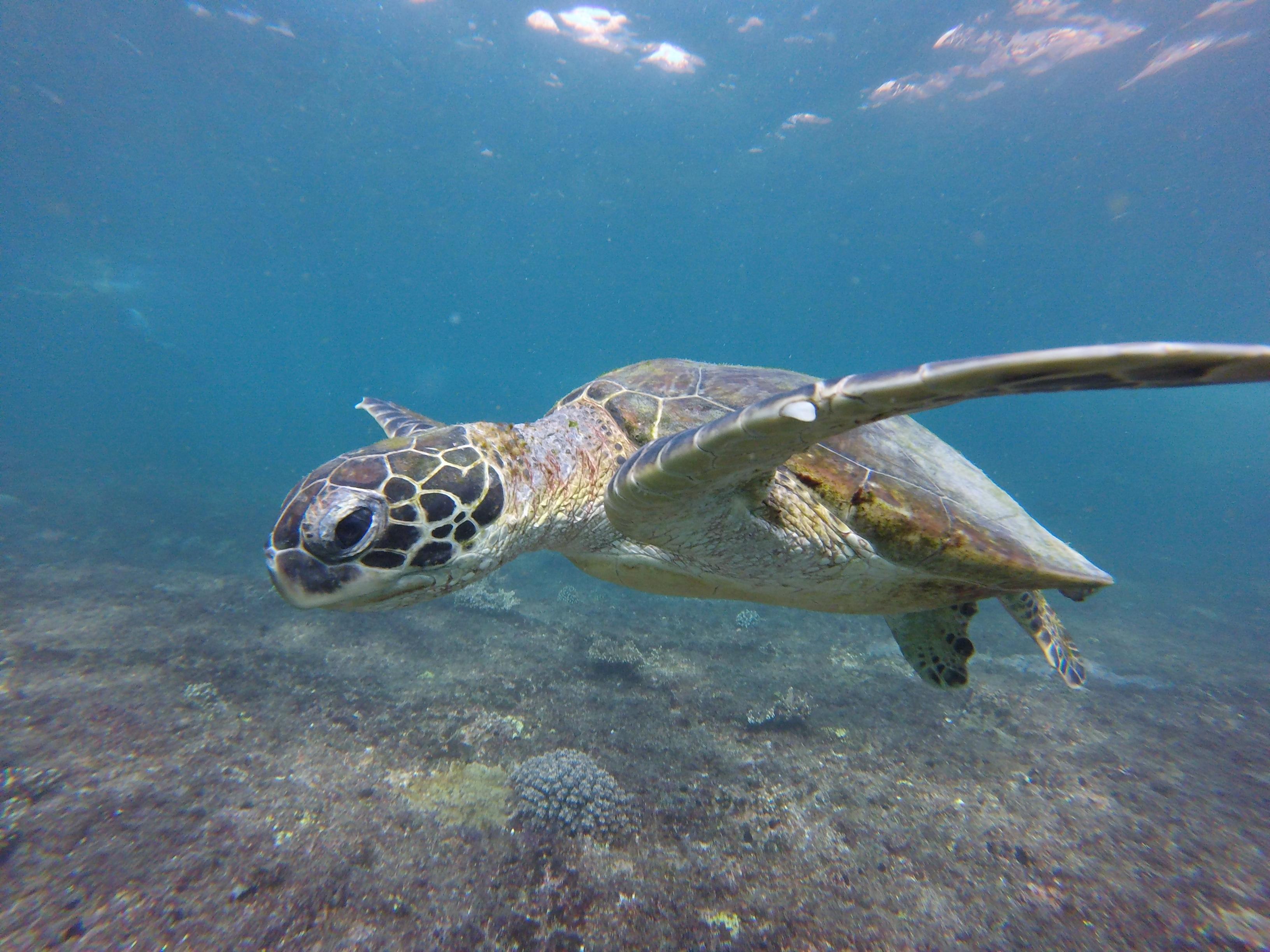 turtle_gopro_oman