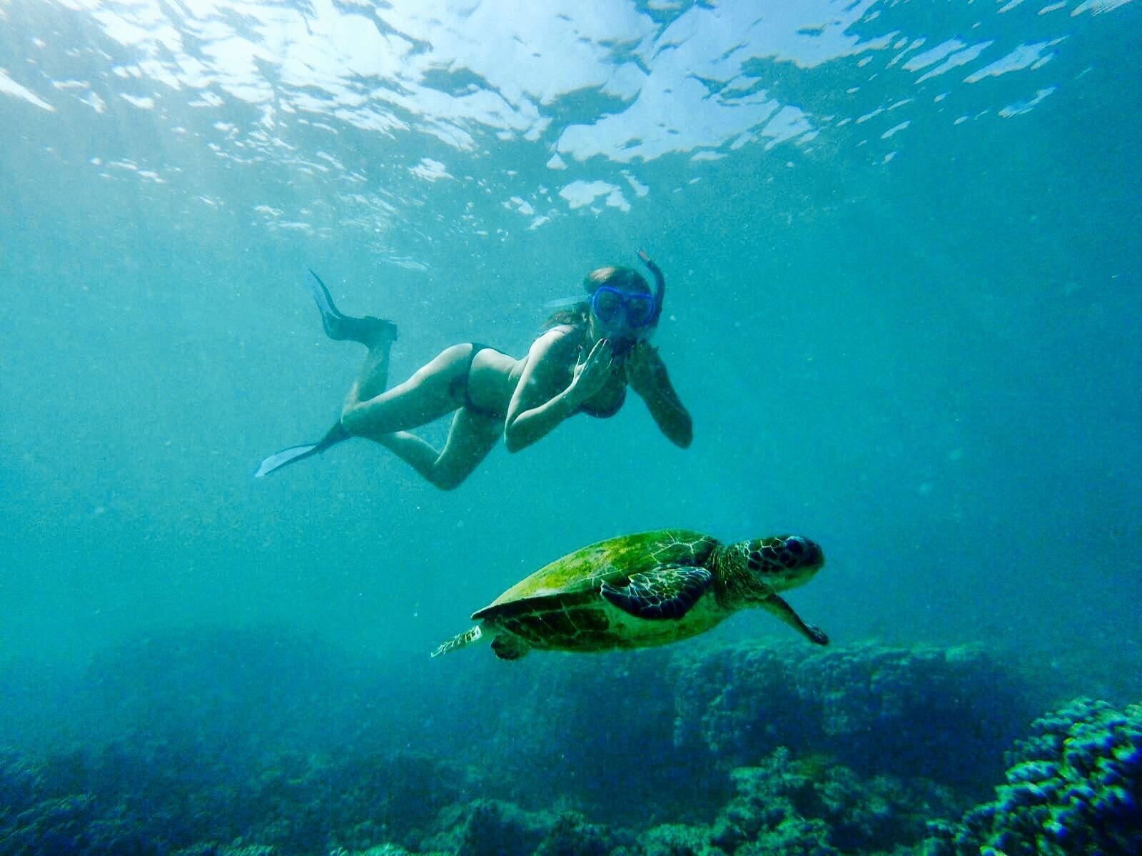 swimming_turtles_oman