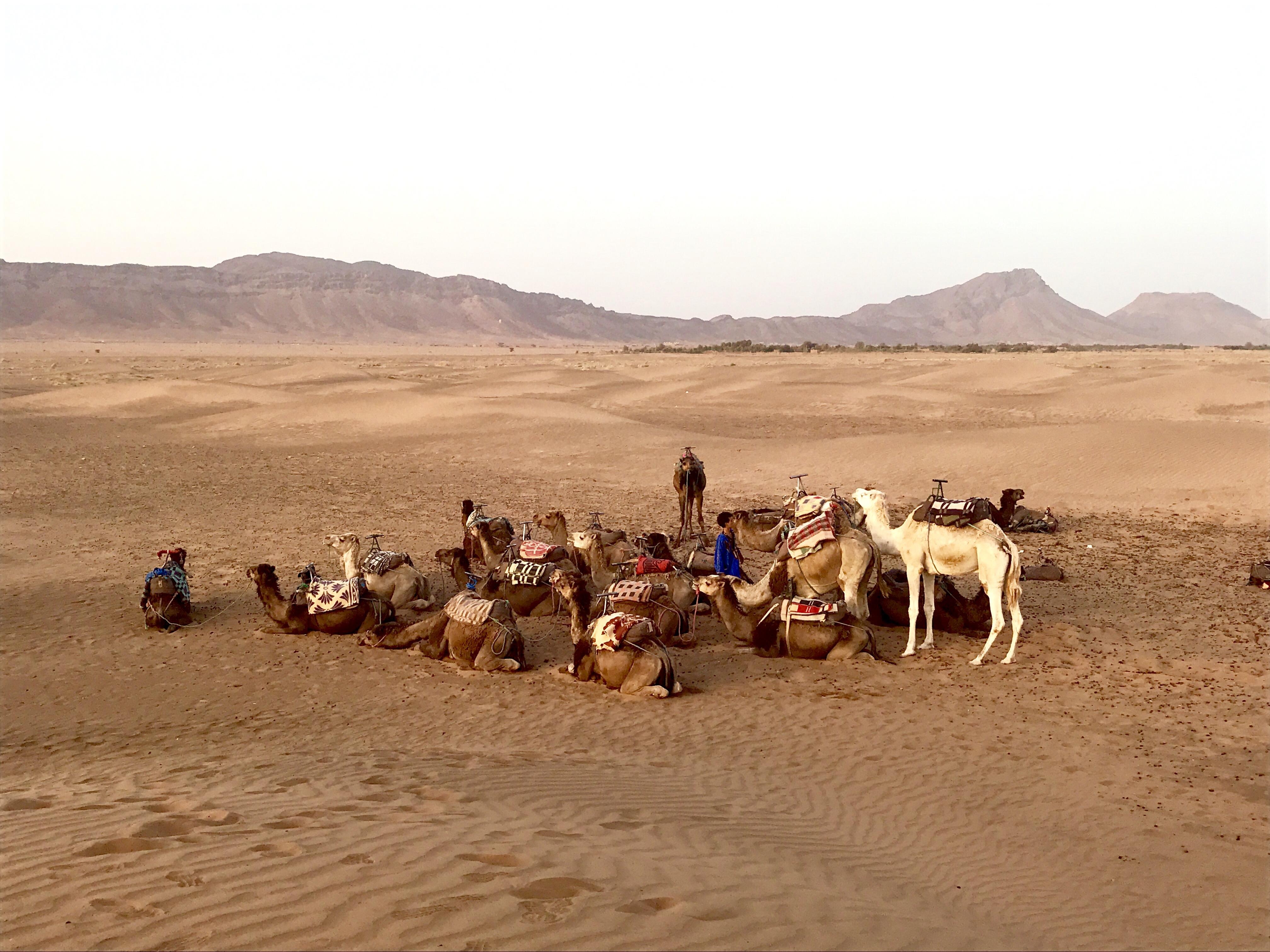 zagora_desert_morocco_lustforthesublime