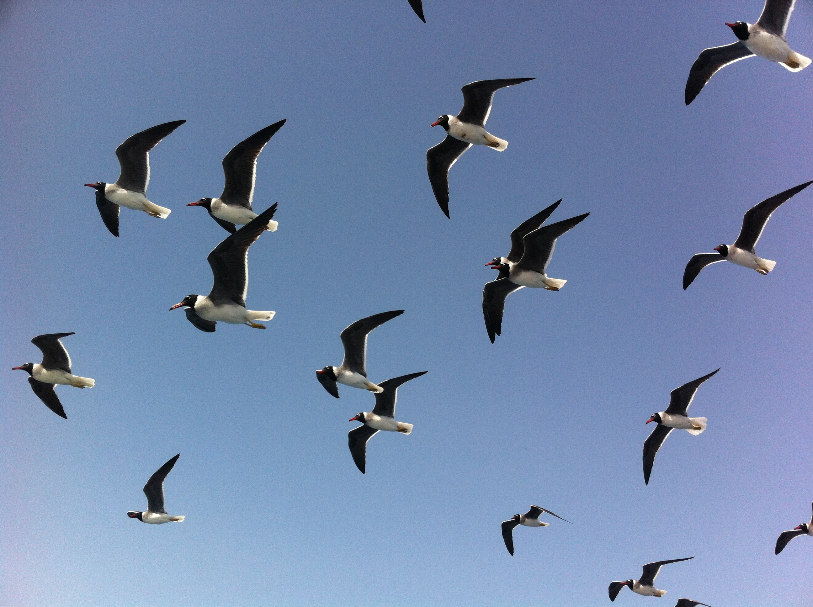 seagulls-redsea-egypt-lustforthesublime