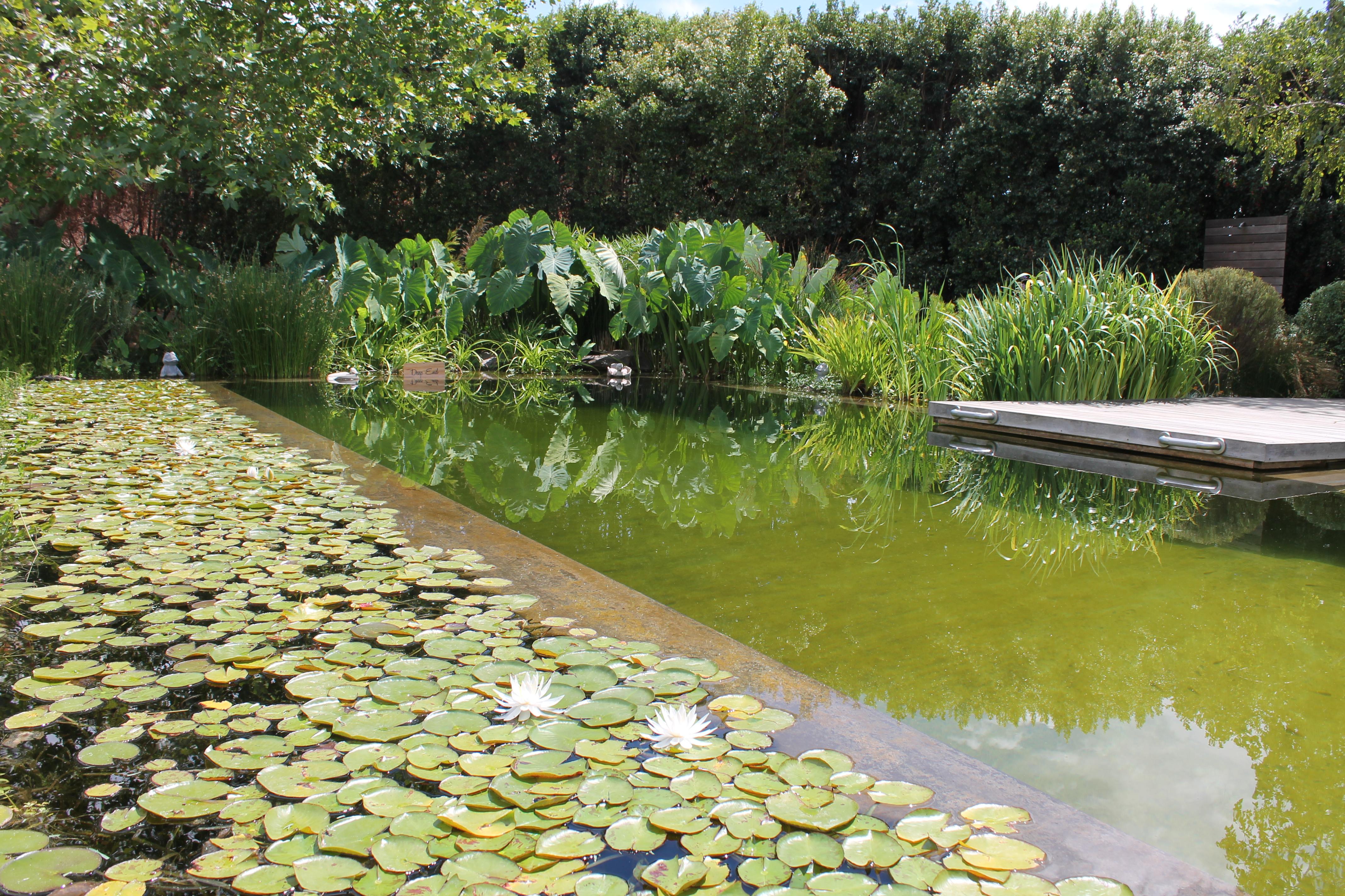 eco-pool-angala-boutique-hotel-lustforthesublime