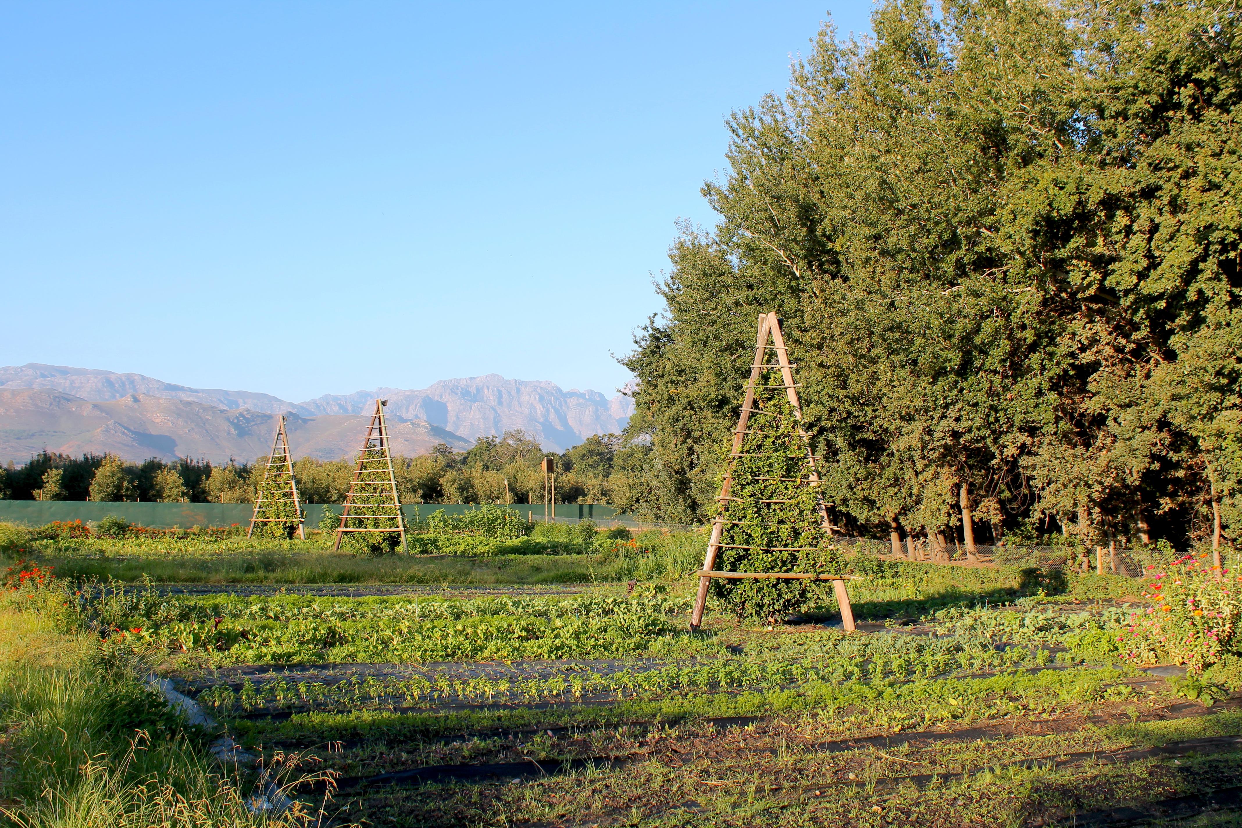 boschendal-gardens-lustforthesublime