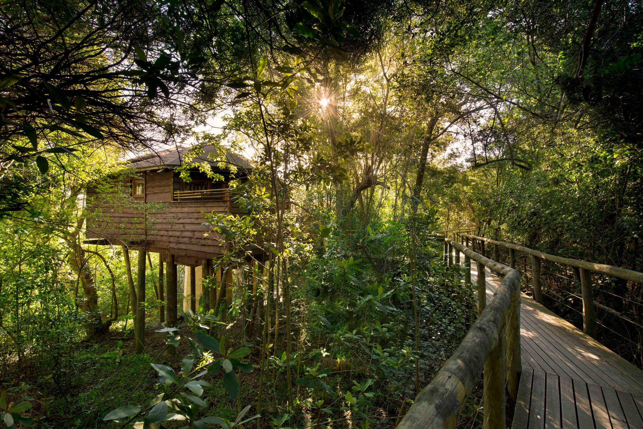 luxury-treetop-house-gardenroute-southafrica