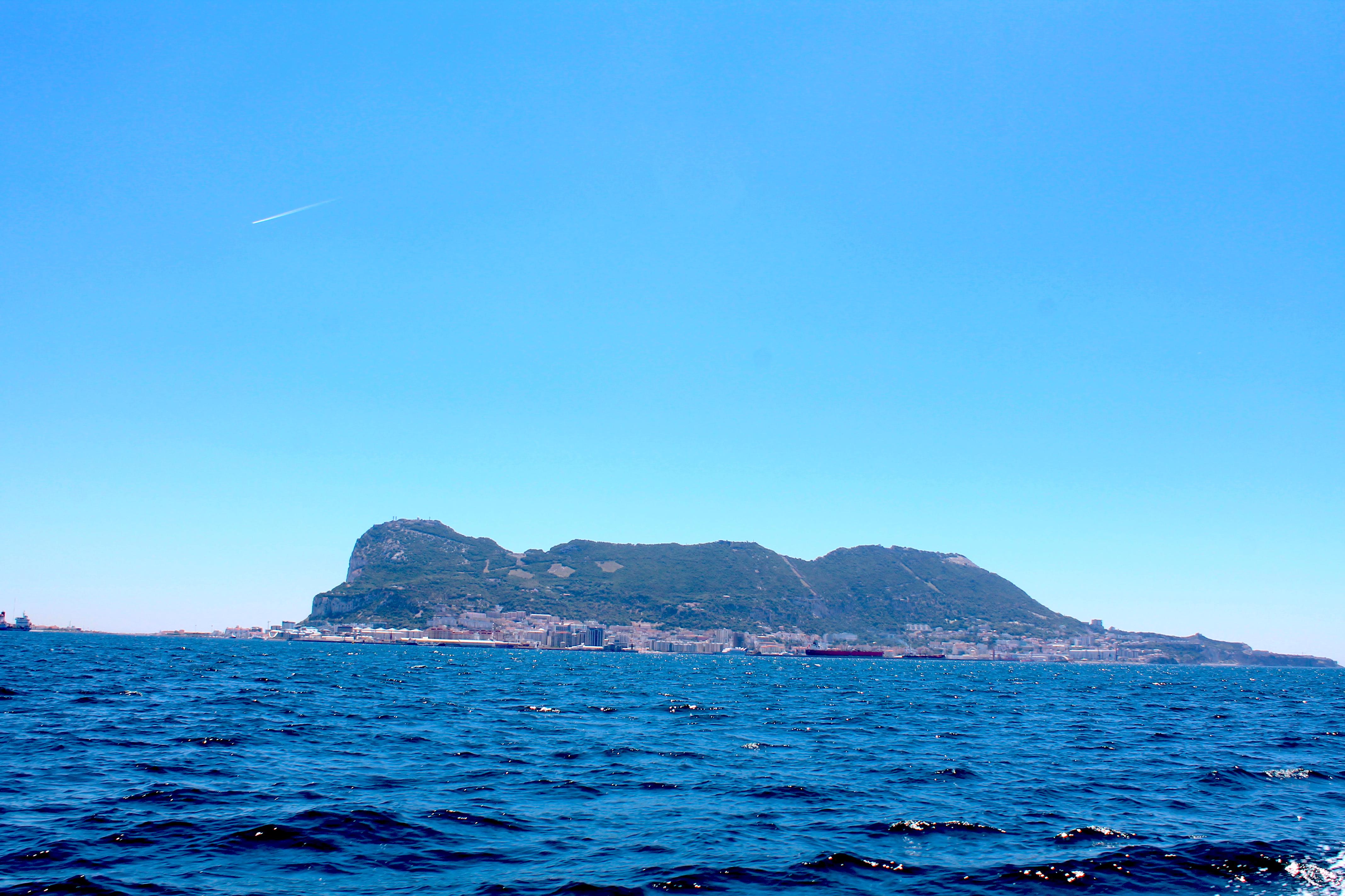 dolphins-tour-gibraltar-lustforthesublime