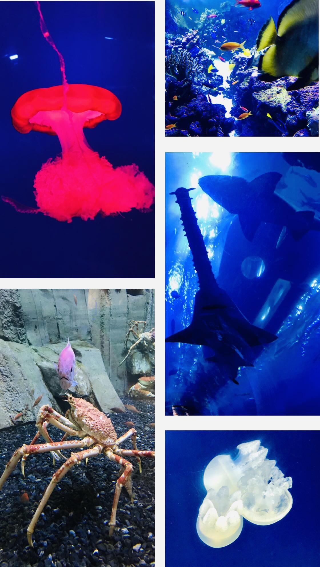 dubai-aquarium-dubai-mall-lustforthesublime